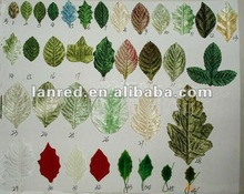 Assortment paper leaves for crafts