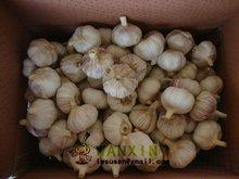 garlic price 2012