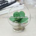 Petite rose miniature de désert, instrument de fleur, vase, culture de pot, miniascape de simulation