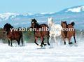 Pet lenticular 3d de caballo