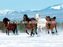 PET lenticular 3d picture of horse