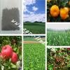 bio Seaweed Organic Fertilizer Best Effect