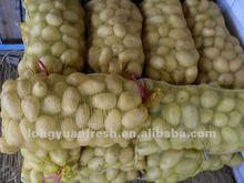 potatoes importers