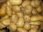 fresh potatoes exporters