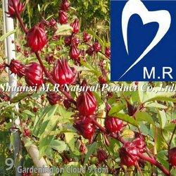 Hibiscus Flower Extract/Hibiscus Sabdariffa