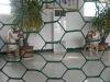 high quality/low price Hexagonal Wire Mesh(PVC&Galvanized)