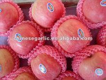 hote sale fuji apple provider