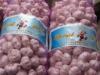 china garlic price 2012