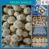 china garlic price 2012,good quality,chea price
