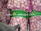 chinese fresh purple garlic