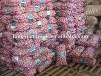 china fresh purple garlic