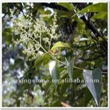 Goldtherad fruit extract natural powder Spec:5:1,10:1,20:1 Ursolic Acid