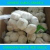 2012 New Crop Chinese dry garlic exporters,gloden supplier