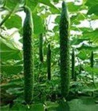 Plant Growth Regulator Ethrel 85%TC,40%AS(ISO)