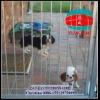 Folding Dog Enclosures