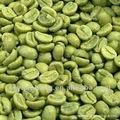 100% naturale acido clorogenico 30% - 50% chicco di caffè verde estratti di fabbrica diretta