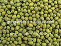 Haricots verts de Chine (HACCP, ISO9001)