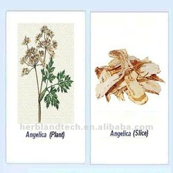 Dong Quai Extract, Angelica sinensis (Oliv.) Diels extracts