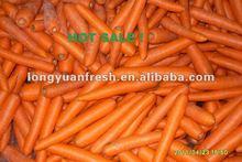316 carrot 2012