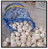 White Garlic Wholesaler