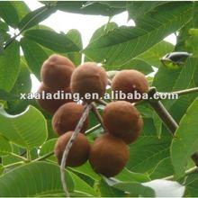 Horse Chestnut Extract Powder Escin