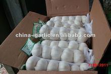 Grade A/Pure White Garlic Farming