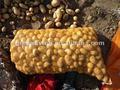 La nouvelle récolte de pommes de terre 80-150g 2014 chinois d'importation et d'exportation