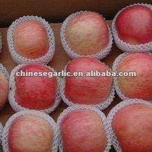 low price fuji apple provider