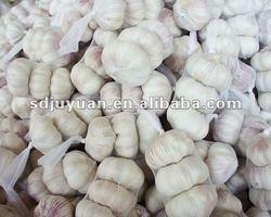 2012 fresh garlic for sales