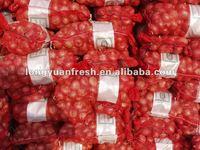 wholesale onion