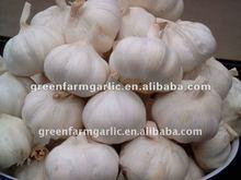 2012 just the chinese garlic