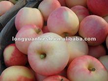 fresh apples fruit