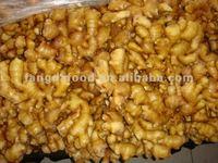 Jahe Gajah/fresh ginger