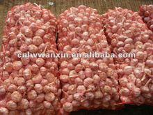 fresh garlic producer