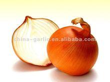 Fresh Onion Price 2012 New Season in China
