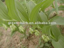 100% Natural Polygonatum Odoratum Plant Extract