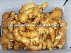 fresh ginger exporter and buyer