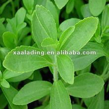 Stevia/Stevia sugar Stevia rebaudiana (Bertoni) Hemsl