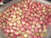 FRESH FUJI APPLES 125---150 FOR SUPERIOR QUALITY