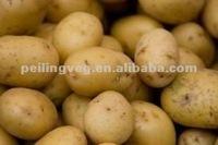 2012 NEW Yellow Sweet fresh holland Potato