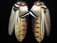 2012 popular earrings stand fashion jewelry earrings