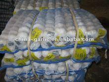 2012 Crop China Garlic Production