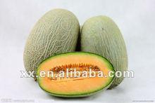 chinese sweet melon