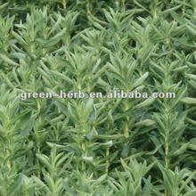 Pure Natural Stevia P.E.