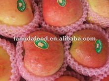 2012 fresh new gala apple