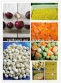 Nome de frutas e legumes com FDA BRC HALHAL KOSHER HACCP