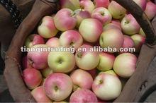 gala apple Shannxi 2012 crop