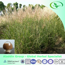 High quality Spartina Anglica P.E/common cordgrass extract powder with 10:1