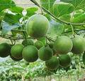 جميع مستخلصات الفاكهة-- الطبيعية sweetner السعرات الحرارية 0 الراهبيمكن luohanguo