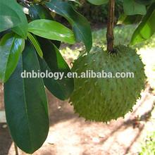 100% graviola leaf extract/graviola leaf p.e 100% pure graviola leaf p.e/Annona Muricata Extract Powder